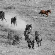 horse herd image